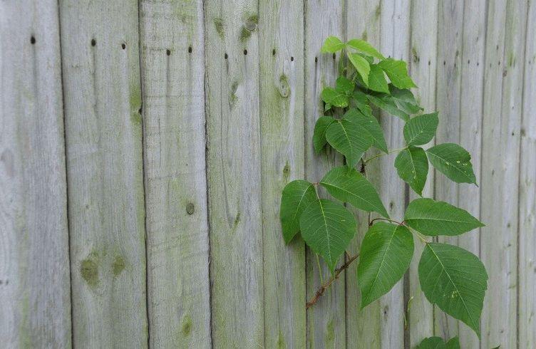 Какой забор лучше деревянный или профнастил — цена-качество