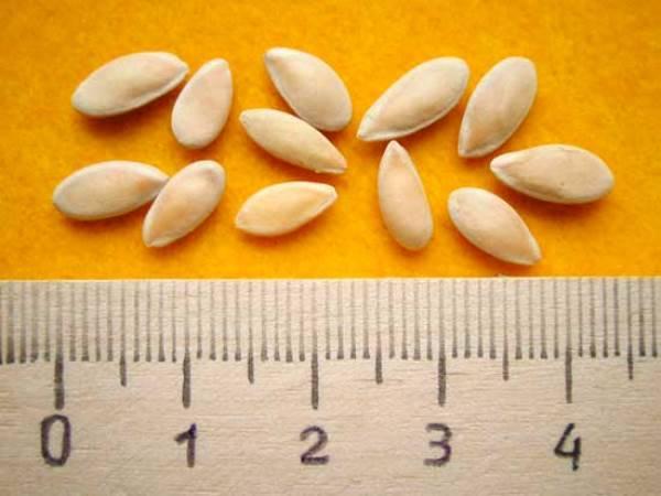 Семена огурцов - выбор лучших