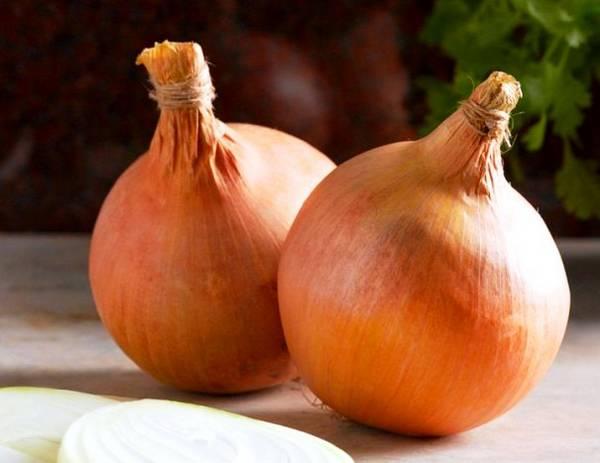 Выращиваем лук Стурон - сочный голландский сорт
