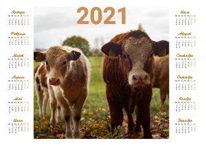 календарь 2021 с быком